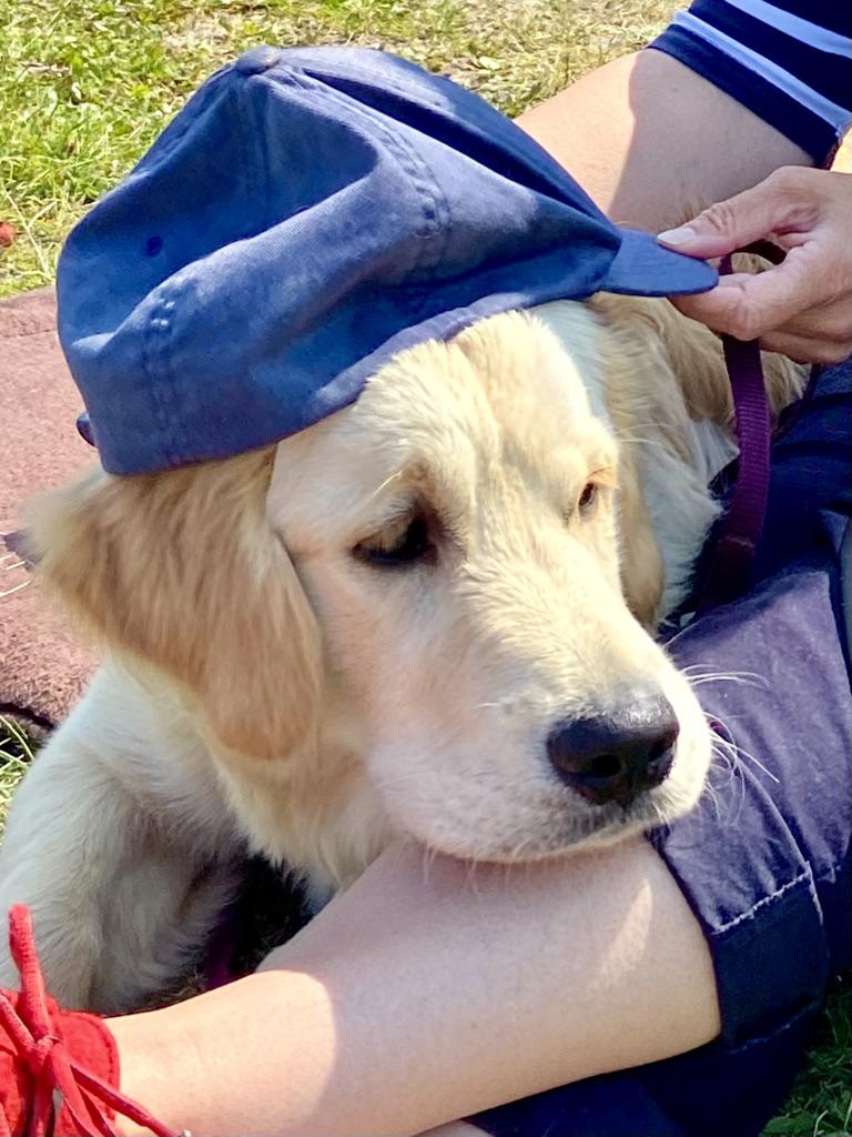 Hund Quintus mit Mütze Friederike App